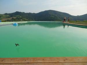 Le Rondini a pelo d'acqua sul biolago