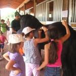 Come spazzolare il cavallo