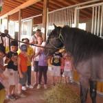 Bambini e cavalli